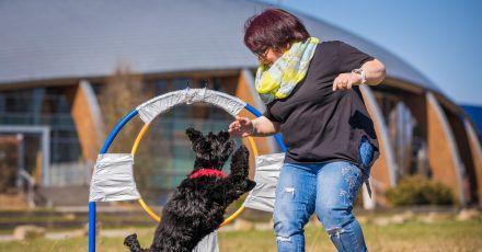 Jutta Gaßmann unternimmt mit ihrem Hund Gil der Rasse American Cocker Spaniel einen Weltrekordversuch im Reifensprung.