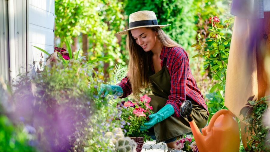 Wer kaum Erfahrung hat und auf Nummer sicher gehen möchte, könnte zunächst pflegeleichte Tomaten anpflanzen. (sob/spot)