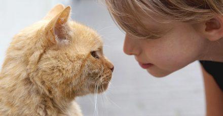 So macht man seinem Stubentiger eine Liebeserklärung: Der Katze zunächst entspannt in die Augen schauen. Dann die eigenen Augen langsam schließen und dann gleich wieder öffnen - aber nur ein Stückchen. Wenn man Glück hat, blinzelt die Katze zurück.