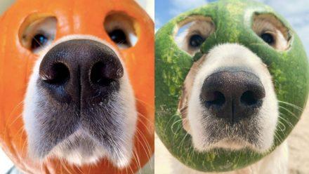 Ist er Cros Nachfolger? Dieser Hund LIEBT Masken!