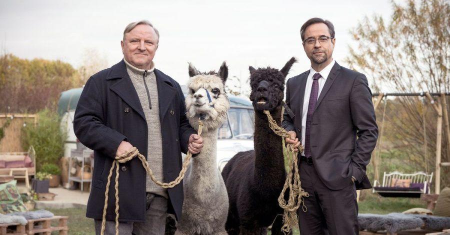 Kommissar Frank Thiel (Axel Prahl, l) und Prof. Karl-Friedrich Boerne (Jan Josef Liefers, r) mit zwei Alpakas.