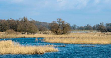 Überschwemmte Polderwiesen im Nationalpark Unteres Odertal, wo der Mensch durchaus in die Natur eingreift.