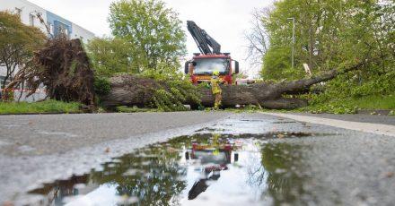 Feuerwehrkräfte bergen eine umgestürzte Pappel im Hannoveraner Heideviertel.