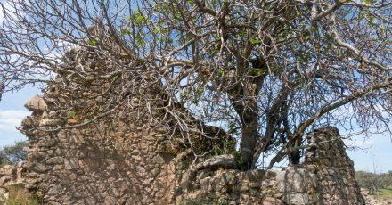 Im Naturpark Sierra de Cardeña y Montoro können Wanderer zum Beispiel das teils in Ruinen liegende Dorf El Cerezo erkunden.