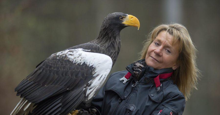 Der Riesenseeadler «Grobi» sitzt auf einem älteren Foto auf dem Arm der Inhaberin der Falknerei Bergisch Land in Remscheid, Carola Schossow.