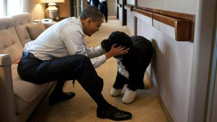 Eines der bekanntesten Fotos von Bo zeigt ihn 2011 mit Herrchen Barack Obama an Bord der Air Force One. (wag/spot)