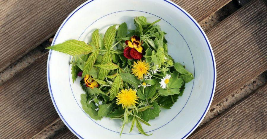 Bunte Tupfer auf dem Teller: Blüten verleihen einem Wildkräuter-Salat ein schönes Aussehen und ein besonderes Aroma.