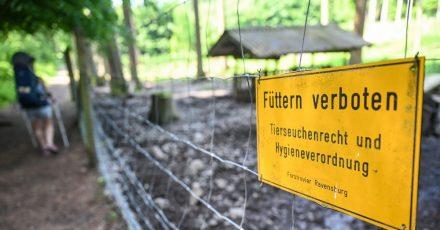 Im Wildgehege am Stadtrand von Ravensburg ist das Füttern von Wildschweinen verboten.