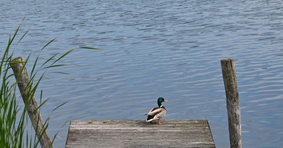 Die Europäische-Umweltagentur präsentierte ihren jährlichen Badegewässer-Bericht, in dem es um die Wasserqualität in Deutschlands Seen, Flüssen und Küstengewässern geht.
