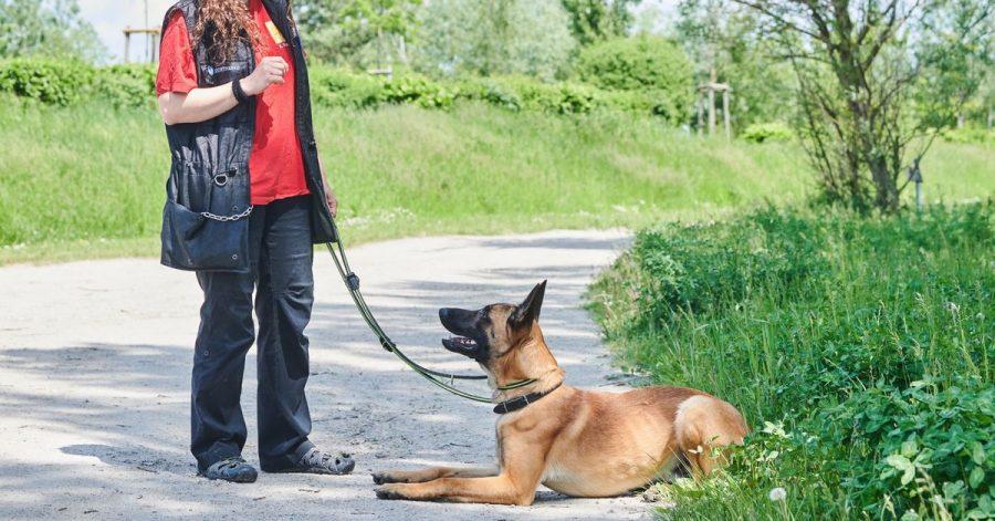 Xenia Katzurke, Tierärztin für Verhaltenstherapie, trainiert mit Schäferhund Leon im Tierheim Berlin.