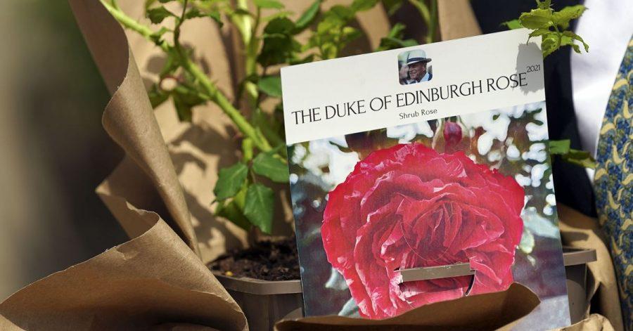 Eine Rose für Prinz Philip.