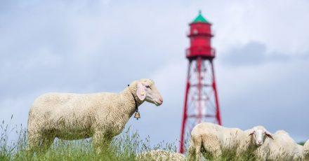 Deutschlands höchster Leuchtturm in Campen in Ostfriesland ist nach fast einem Jahr Generalüberholung wieder für Besucherinnen und Besucher geöffnet.