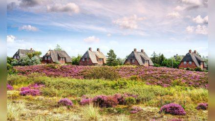 Prägen den Charme der Insel Sylt: Reetdachhäuser  (abo/spot)