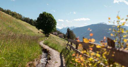 Eine Wanderung auf dem Schenner Waalweg ist eine schöne Familientour in Südtirol.
