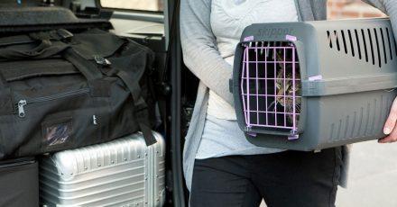 Das Reisen mit Katze oder Hund will gut vorbereitet sein.