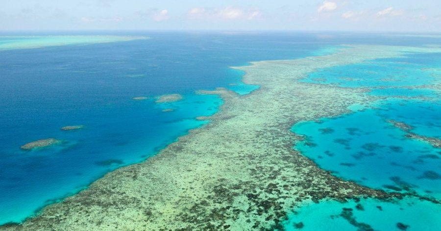 Die Umweltschäden am Great Barrier Reef nehmen zu. Das Unesco-Welterbekomitee fordert Australien eindringlich auf, Maßnahmen gegen den Klimawandel zu treffen.