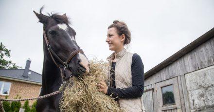 Ein 600-Kilo-Sportpferd benötigt zwischen 9 bis 12 Kilo Heu am Tag. Es sollte dabei allerdings qualitativ hochwertig sein.