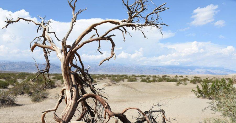 Nicht nur im Death Valley National Park (Kalifornien) ist es sehr, sehr heiß.