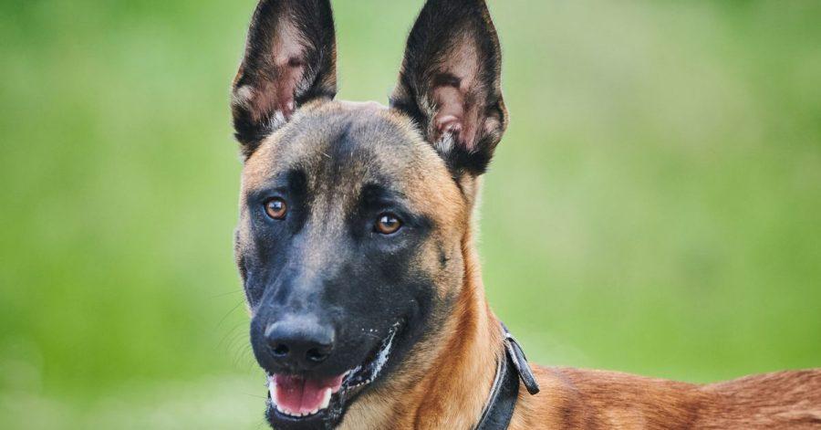 Leon wurde während der Corona-Pandemie sichergestellt und ins Tierheim Berlin gebracht. Angesichts sinkender Infektionszahlen befürchten Tierschützer zahlreiche Abgaben von neu angeschafften Haustieren.