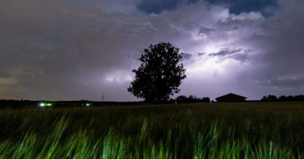Blitze entladen sich über einem Baum bei Grasbrunn.