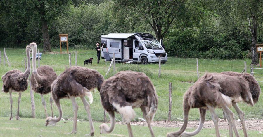 Wie IT-Programmierer Hendrik nutzen immer mehr Caravan-Besitzer Angebote von Bauerhöfen, Weingütern oder Tierfarmen, um dort kurz Halt zu machen.
