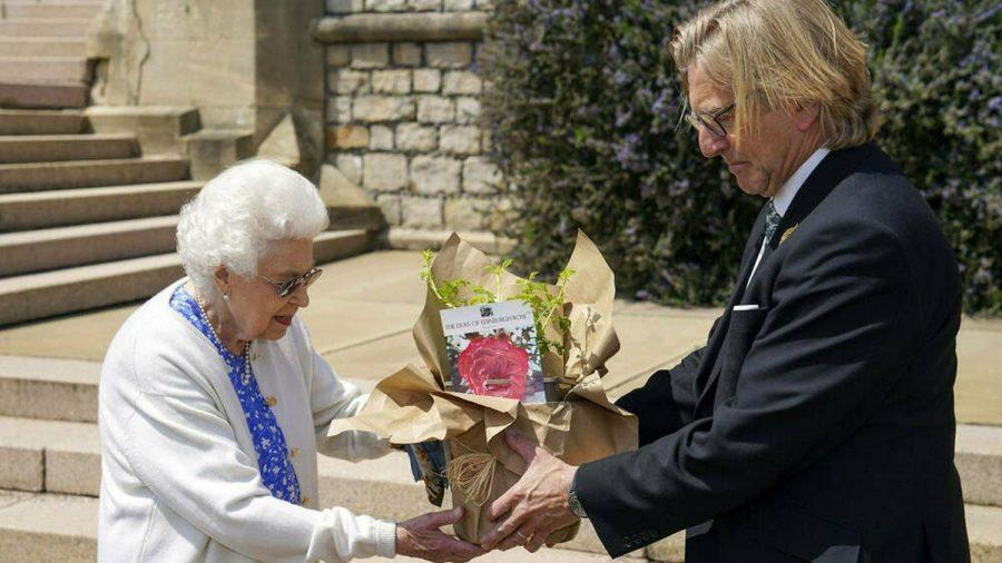 """Queen Elizabeth II. bekam die """"Duke of Edinburgh""""-Rose überreicht. (amw/spot)"""