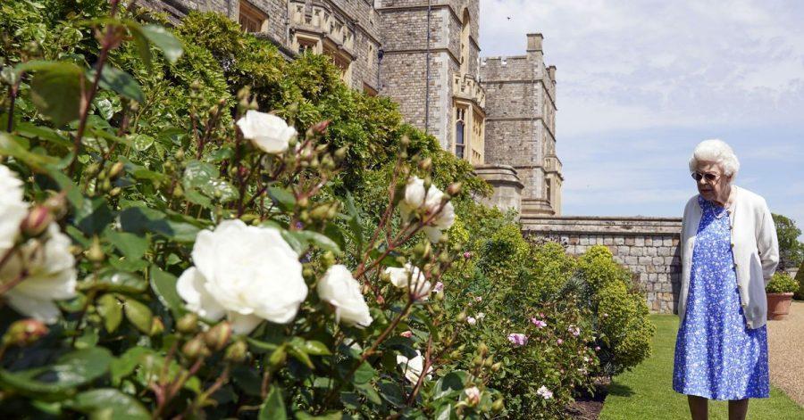Die Queen erfreut sich an den Rosen auf Schloss Windsor.