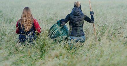 Zwei Helferinnen der Rehkitz-Rettung Weinheim suchen in einer Wiese nach Rehkitze.