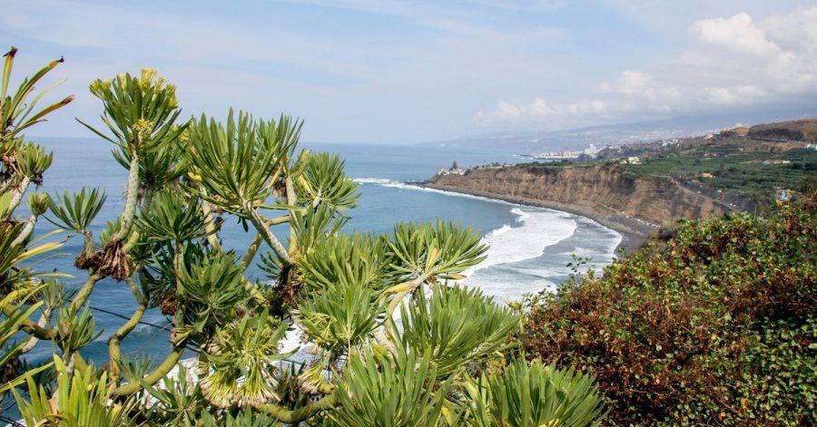 Voraussichtlich das Winterziel Nummer eins: Die Kanarischen Inseln - hier Teneriffa - stehen bei vielen Tui-Gästen hoch im Kurs.