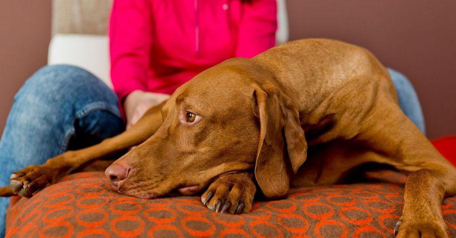 Nicht jeder Pflegehund passt zu jedem Pflegehaushalt.
