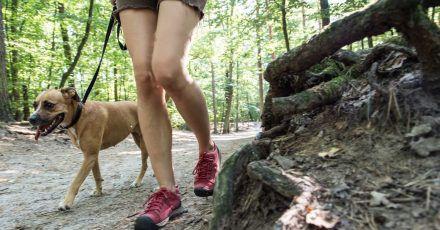 Bei Wanderungen mit dem Hund sollte man Kuhweiden und steile Pfade meiden, dafür aber regelmäßige Trinkpausen einplanen.