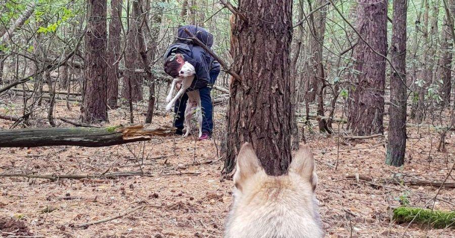 Ein Pettrailer-Hund hat den Ausreißer im Wald aufgespürt.