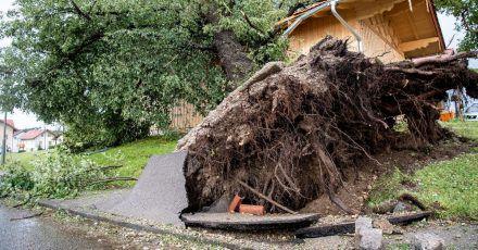 Starker Wind hat in Halfing einen massiven Baum entwurzelt.