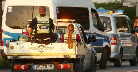 Ein Fahrzeug mit Tierrettern und Tieren verlässt Erftstadt in Nordrhein-Westfalen. Nach der Flutkatastrophe werden viele Tiere ins Tierheim gebracht.