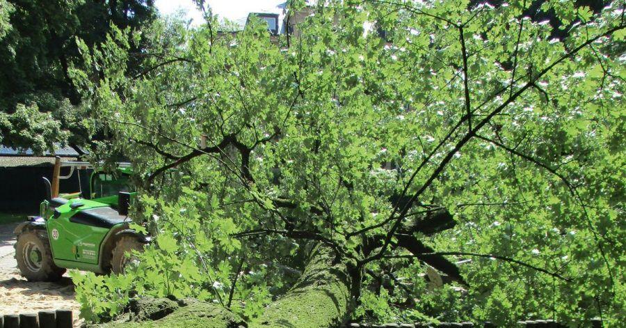Der umgestürzte Baum liegt auf einem Spielplatz in Augsburg.