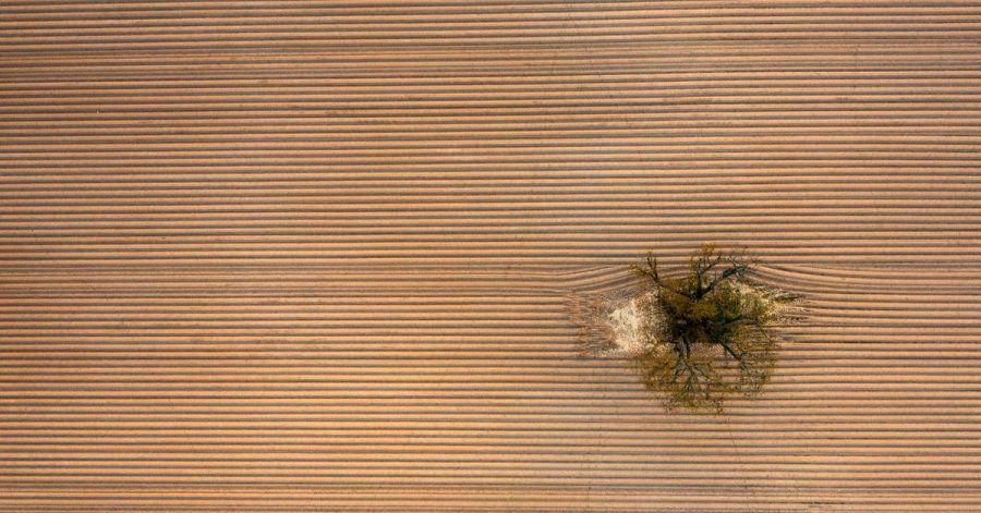 Ein einziger Baum steht inmitten eines frisch angelegten, riesigen Kartoffelackers am Rande der Wetterau.
