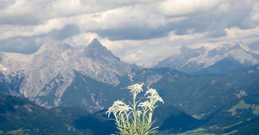 In den Tiroler Alpen ist ein Ehepaar aus Bayern schwer verunglückt - der Mann überlebt nicht. (Archivbild)
