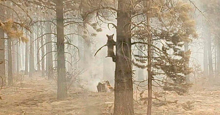 Ein Bärenjunges klammert sich an einem Baum fest.