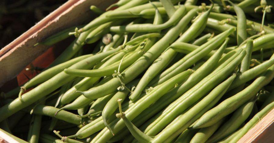 Beliebtes Gemüse: Viele Menschen bauen grüne Bohnen im eigenen Garten an.