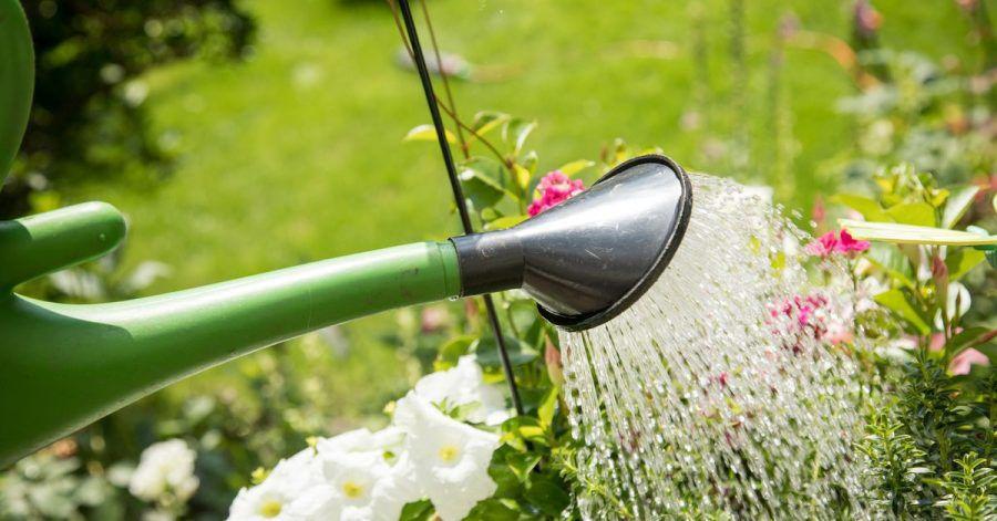 Wer seine Pflanzen nicht regelmäßig gießt, riskiert, dass diese auf Dauer Wasser schlechter aufnehmen können.
