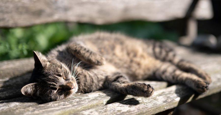 Eine Katze nimmt am Samstag ein Sonnenbad.