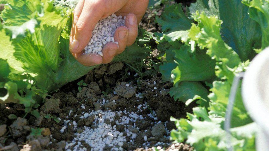 Algenkalk kann als ökologischer Gartendünger eingesetzt werden. (ncz/spot)