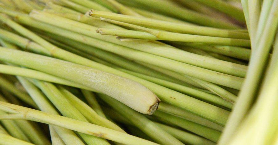 Beim Kochen mit Zitronengras müssen die äußeren harten Blätter entfernt werden. Das beste Stück ist der knollenförmige Teil. Er bietet klein geschnitten das beste Aroma.