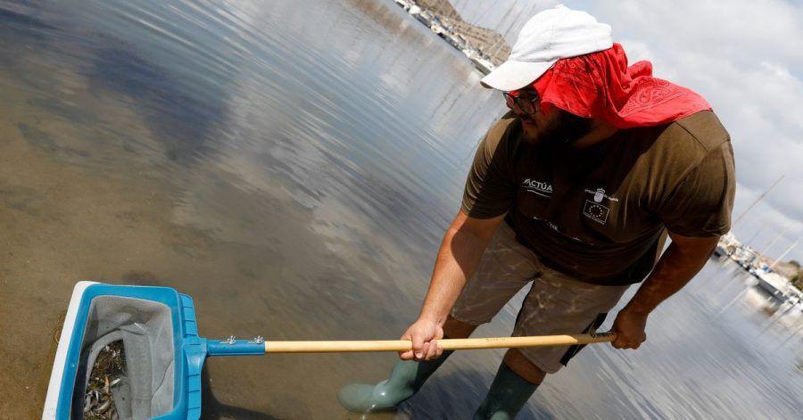 Ein Mann holt tote Fische aus dem Mar Menor.