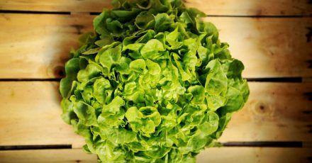 Damit sich ein Salatkopf ein paar Tage im Kühlschrank hält, sollte er in ein feuchtes Tuch gewickelt werden. Ein paar Tropfen Essig oder Zitronensaft helfen außerdem.