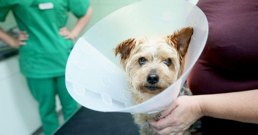 Muss ein Hund operiert werden, wird es oft richtig teuer. Lohnt eine Versicherung für den Vierbeiner?