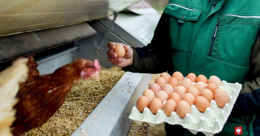 Wer viel mit Hühnern zu tun hat, atmet auch Allergene aus den Federn und dem Tierkot ein.