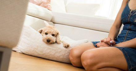 Um das stufenweise Alleinsein des Hundes zu trainieren, sollte der Vierbeiner zunächst eine Komfortzone mit Decke oder Hundebett bekommen, wo er sich gerne aufhält und entspannt.