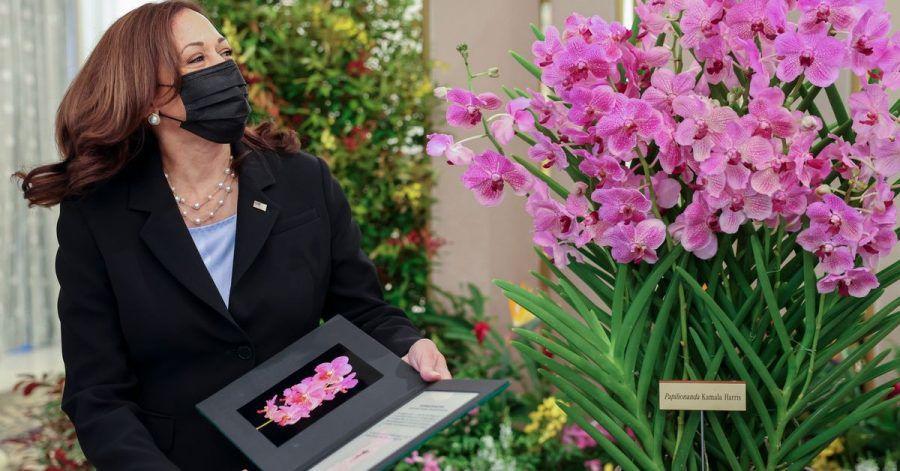 US-Vizepräsidentin Kamala Harris posiert neben Papilionanda Kamala Harris während einer Orchideentaufe. Singapur hat anlässlich des Besuchs von US-Vizepräsidentin Kamala Harris eine Orchidee nach der demokratischen Politikerin benannt.
