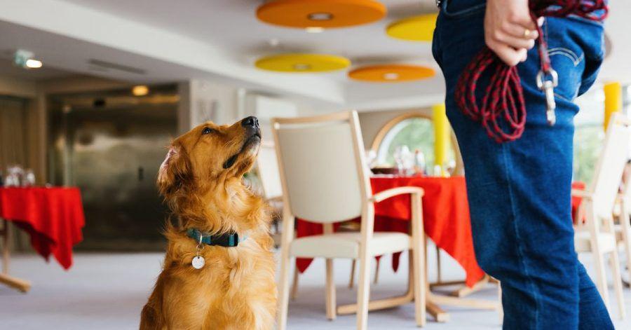 Hundeführerin Christelle Schreiber steht neben Pokaa, dem laut ihr ersten in Frankreich eingesetzten Covid-Suchhund.